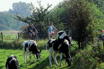 Vakantiepark Soeten Haert in Renesse - Zeeland, Nederland foto 10829