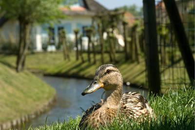 Buitenhof Domburg in Domburg - Zeeland, Nederland foto 10862