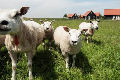 Recreatiepark de Stelhoeve in Wemeldinge - Zeeland, Nederland foto 10899