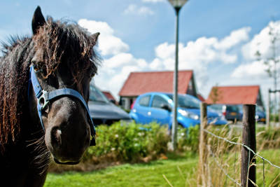 Recreatiepark de Stelhoeve in Wemeldinge - Zeeland, Nederland foto 10900