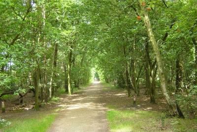 Recreatiepark de Stelhoeve in Wemeldinge - Zeeland, Nederland foto 10909