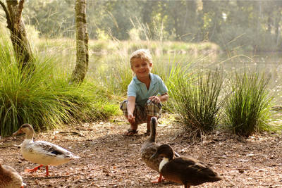 Bospark 't Wolfsven in Mierlo - Noord-Brabant, Nederland foto 11230