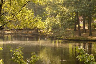 Bospark 't Wolfsven in Mierlo - Noord-Brabant, Nederland foto 11239