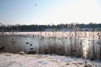Vakantiepark Weerterbergen in Weert - Limburg, Nederland foto 11399