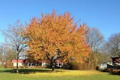 Bungalowpark Schin op Geul in Walem - Limburg, Nederland foto 11549