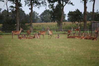 Landschapspark Striks Erve in Ijhorst - Overijssel, Nederland foto 12153