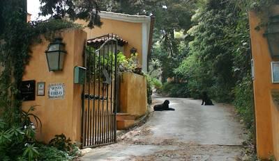 Natuurhuisje in Colares sintra