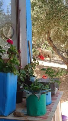 Natuurhuisje in Heraklion crete