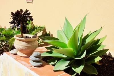 Natuurhuisje in Arico