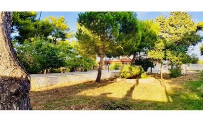 Natuurhuisje in Bari