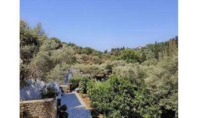 Natuurhuisje in Andros