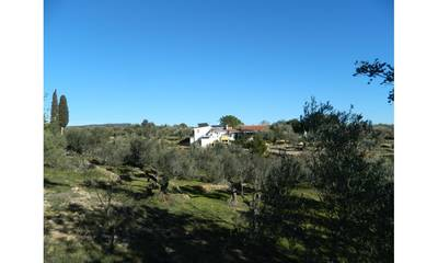 Natuurhuisje in Camarles