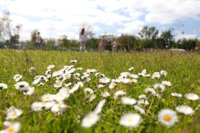 Vakantiepark Callassande in Groote Keete - Callantsoog - Noord-Holland, Nederland foto 9932